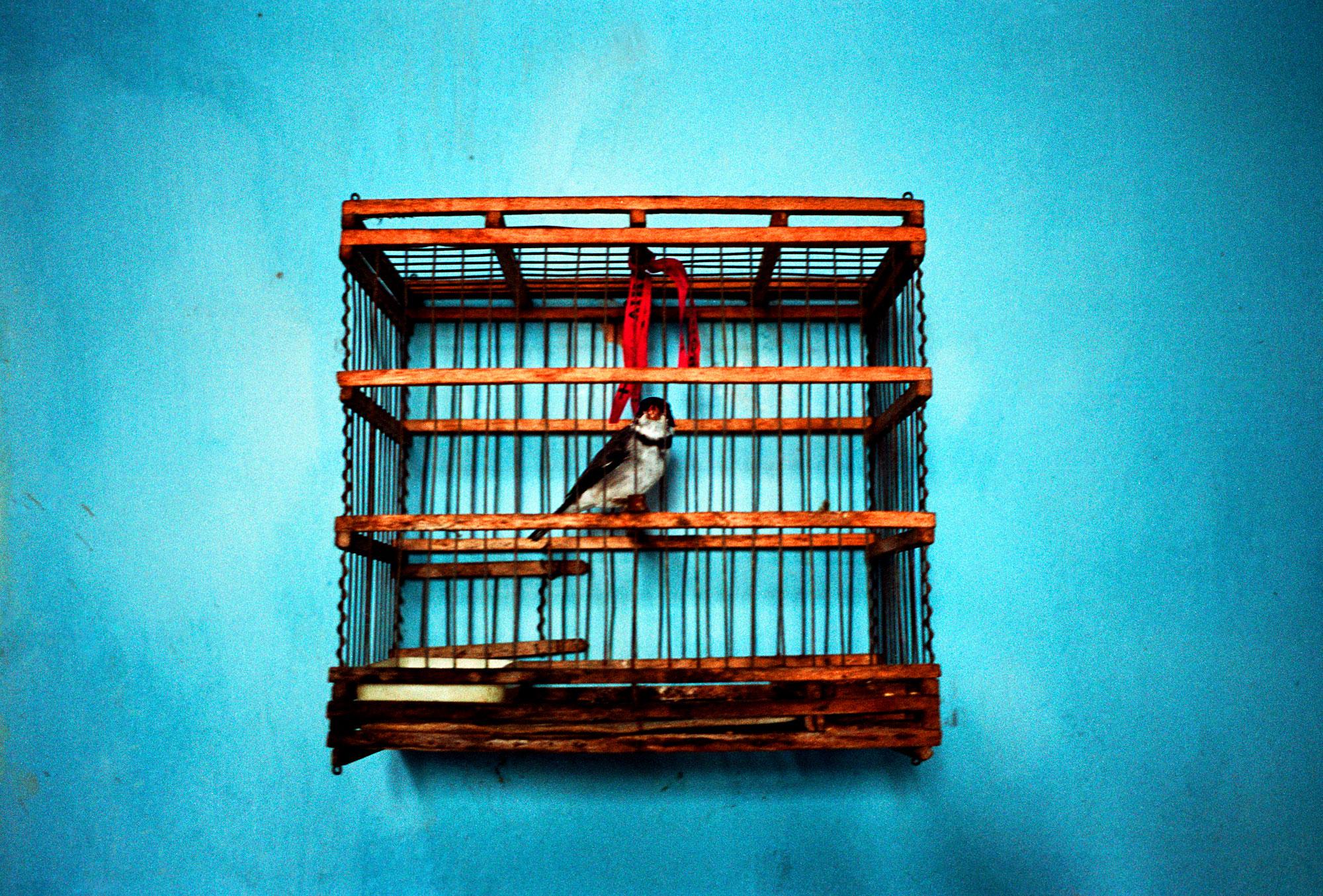 BirdCage-HOR1